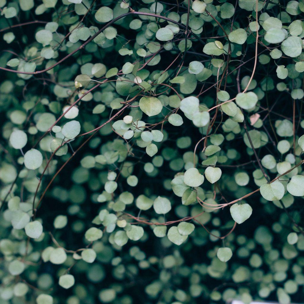 Nachhaltigkeit bei Moon Deli - Quelle: unsplash.com, Foto: Vadim L